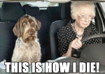 funny-scared-shocked-dog-car-old-woman-senior-citizen-driving
